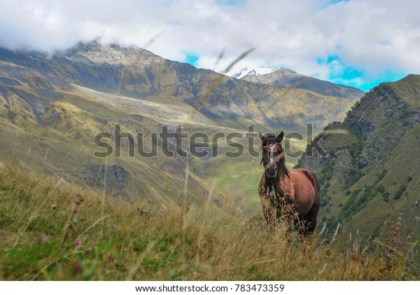 horse and mountain