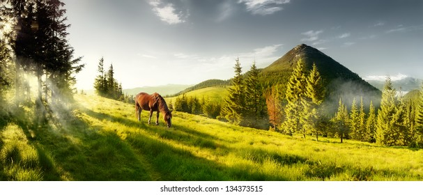 Horse in the mountains. Summer panorama landscape in the mountains. Ukraine, Carpathians