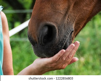 Horse mouth in the woman hand