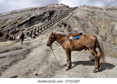 Horse and Mt. Bromo, Indonesia