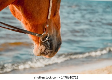 Horse muzzle with hairy chin. Chestnut horse muzzle with bridle. Horse nose on wavy beach background.