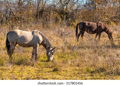 Horse in natural environment
