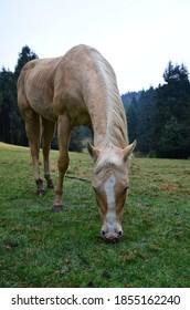 horse nature naturaleza caballo field