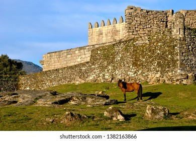 Horse near castle in National Park of Peneda Geres, Portugal