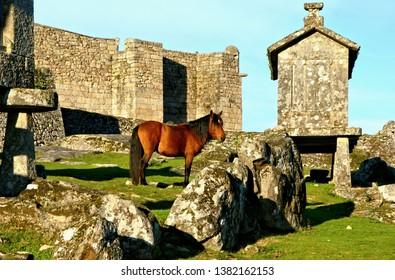 Horse near granaries in National Park of Peneda Geres, Portugal