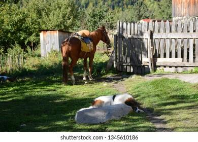 Horse near the house in Mazeri village, Swaneti, Georgia