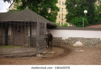 Horse in a neat aviary. Grate, roof, fence. The trampled path. Far away are green trees and houses.