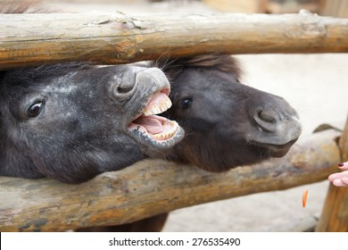 horse neighs