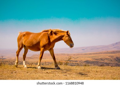 Horse and newborn colt, graze in autumn on a meadow, concept of cattle breeding, with space for text