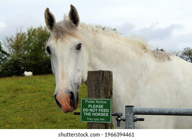 Horse next to do not feed sign