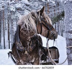 horse in the north of Scandinavia market