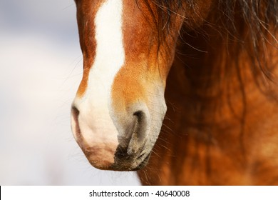horse nose closeup
