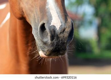 Horse nozzles