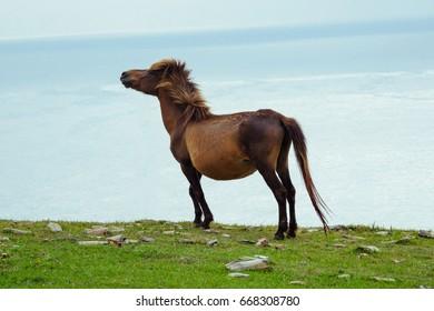 horse in okinawa