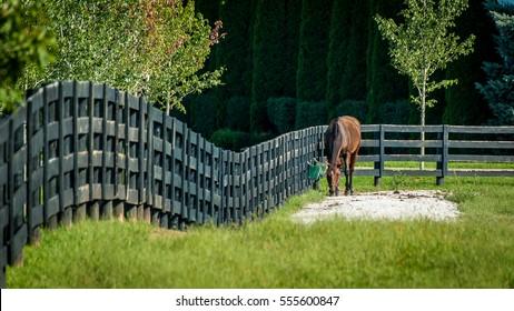 Horse on a fenced field, near Lexington, Kentucky.