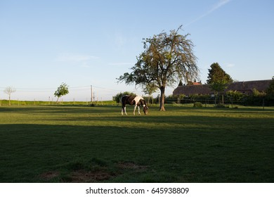 a horse on a field