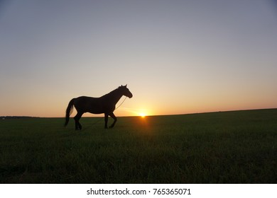 horse on the green field.  cloudless sunrise