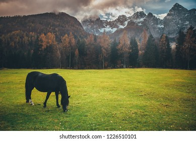 Horse on green meadow. Majestic Alps mountains in background. Slovenia.