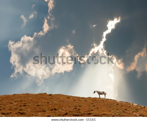 Horse on hill & clouds