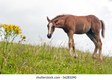 A horse on a hill side.