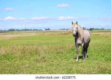 Horse on a meadow with birds on a back