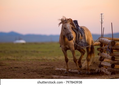 Horse on Mongolian countryside, countryside