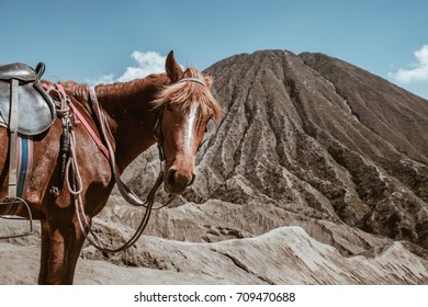 horse on Mount Bromo volcano (Gunung Bromo) at Bromo Tengger Semeru National Park, East Java, Indonesia.