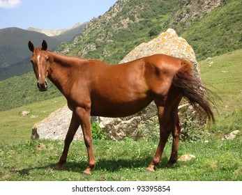 Horse on a mountain pasture