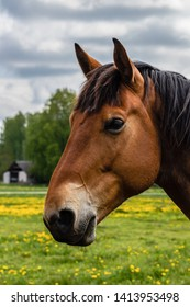 Tête De Cheval Images Stock Photos Vectors Shutterstock