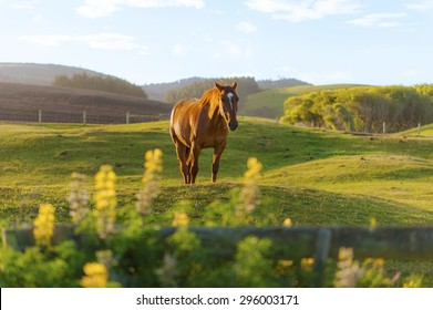 Horse on nature. Portrait of a beautiful brown horse and white horse.