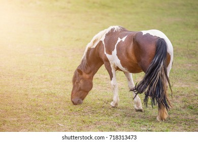 Horse on a pasture on the meadow in the countryside