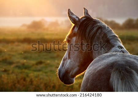 Horse on pasture at September evening near sunset.