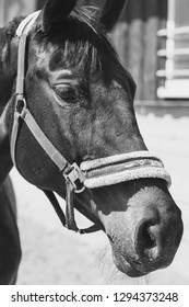 Horse on a riding Stable in Black and White