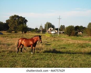 Horse on a summer field