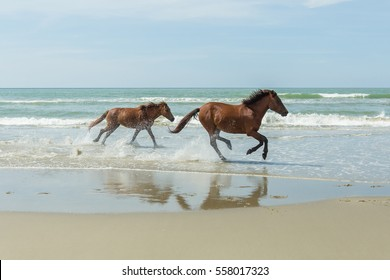 horse on the Tuaran beach, Sabah Borneo