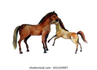 horse on white background. watercolor illustration, animal image