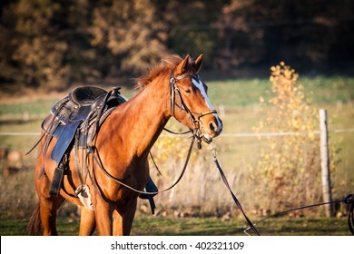 Horse outdoor shot. Horse on meadow, domestic horse farm shot. Beautiful horse outside the stable. Riding western horse.