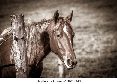Horse outdoor shot. Horse on meadow, domestic horse farm shot. Beautiful horse outside the stable. Riding western purebreed horse.