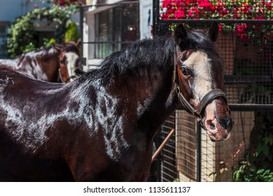 Horse outside of stables being washed with a second horse in the background in London, United Kingdom