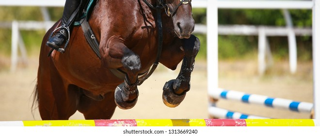 Horse over the jump, close-up of the angled front legs.