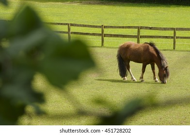 Horse in paddock with fence, Devon UK/