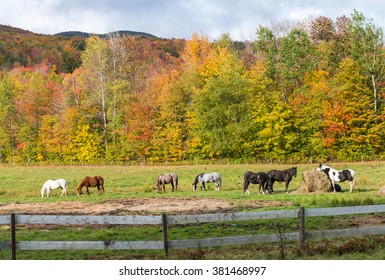 Horse Paddock View in Beautiful Fall Landscape. Foilage concept.