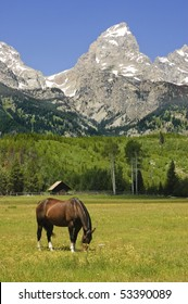 horse in a pastoral paddock at the base of the Tetons