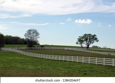 Horse pasture lined with white fence.