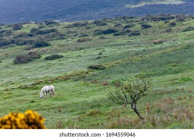 Horse pasture on northeast slope of Slievenaglogh peak (Irish: Sliabh na gCloch) on the road from Mullaghattin Townland to Riverstown.  Cooley Peninsula, County Louth, Ireland.