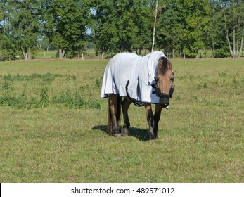 Horse in the pasture protected with horse blanket for the cold season. Hanover, Germany