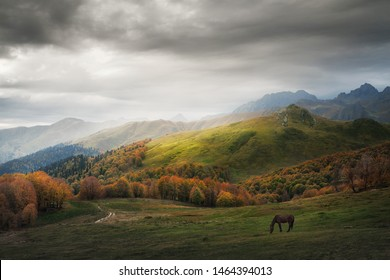 horse pasturing on a mountain pasture in autumn