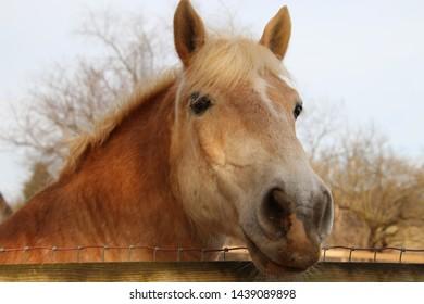 Horse peeking over the fence