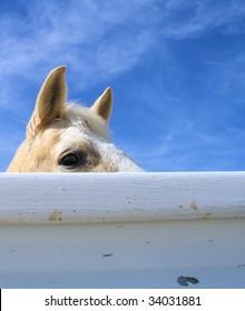 Horse peeking over a fence