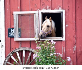 A horse peeks out the window near a No Smoking sign on an old red barn.